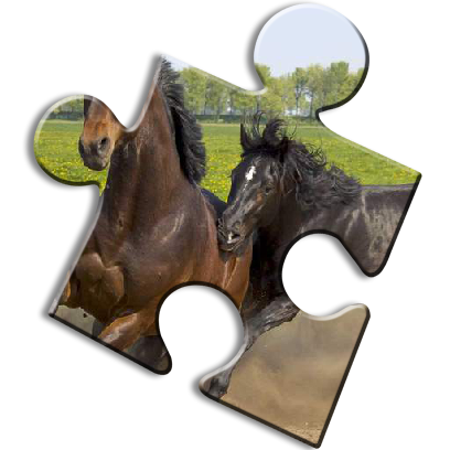 Horse Jigsaw Puzzles - Brain Training Games messages sticker-1