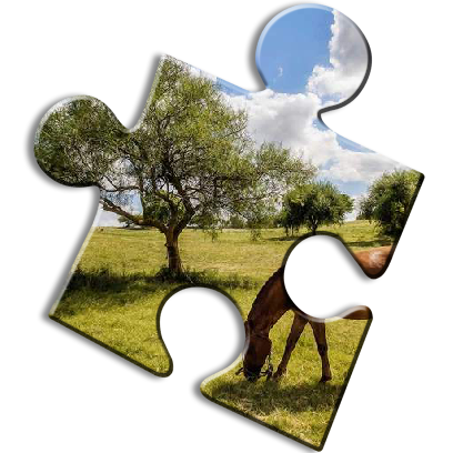 Horse Jigsaw Puzzles - Brain Training Games messages sticker-7