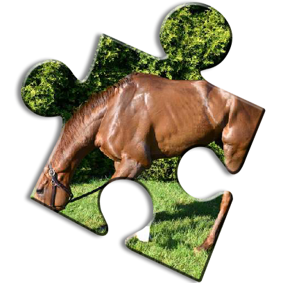 Horse Jigsaw Puzzles - Brain Training Games messages sticker-9