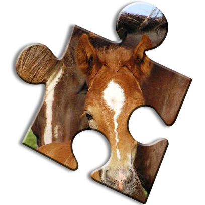 Horse Jigsaw Puzzles - Brain Training Games messages sticker-2