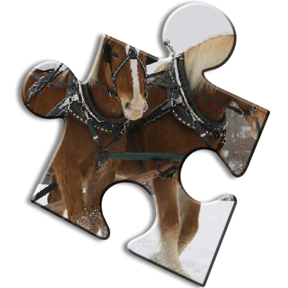 Horse Jigsaw Puzzles - Brain Training Games messages sticker-3