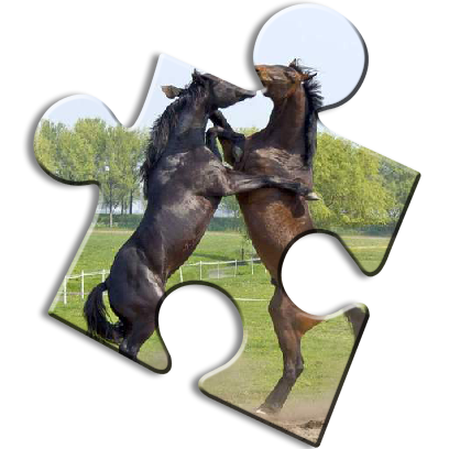 Horse Jigsaw Puzzles - Brain Training Games messages sticker-5