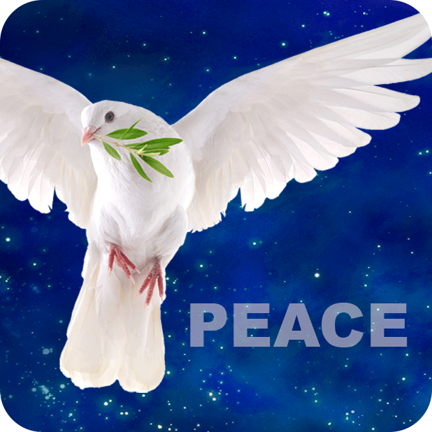 Wishes Peace + Gratitude Diary messages sticker-3
