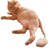 Cats Everywhere messages sticker-3