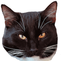 Cats Everywhere messages sticker-1