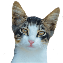 Cats Everywhere messages sticker-7