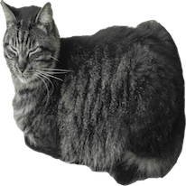 Cats Everywhere messages sticker-11