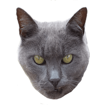 Cats Everywhere - Add Cats to Pictures/Photos messages sticker-10