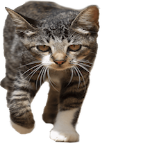 Cats Everywhere messages sticker-0