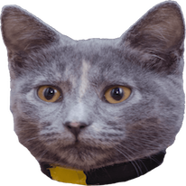 Cats Everywhere messages sticker-2