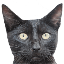 Cats Everywhere messages sticker-4