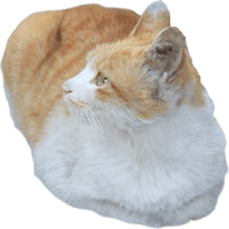 Cats Everywhere messages sticker-9