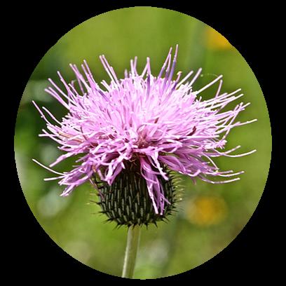 Flower Power Stickers messages sticker-2