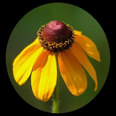 Flower Power Stickers messages sticker-1