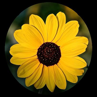 Flower Power Stickers messages sticker-4