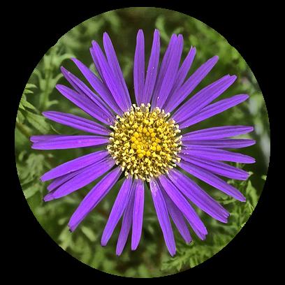Flower Power Stickers messages sticker-0