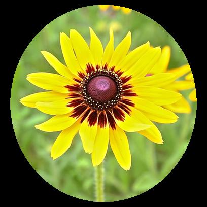 Flower Power Stickers messages sticker-9