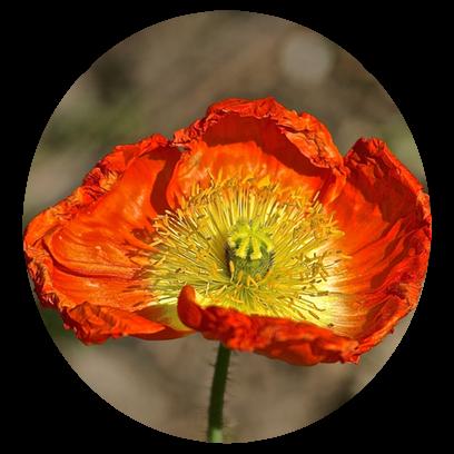 Flower Power Stickers messages sticker-3