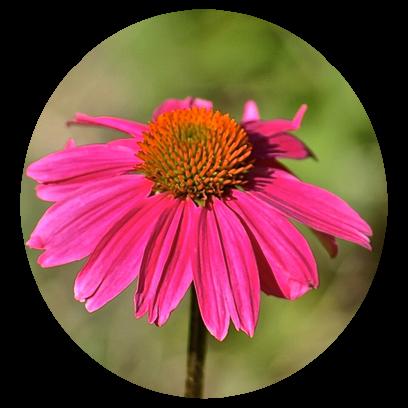 Flower Power Stickers messages sticker-8