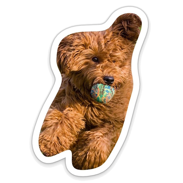 Louie - Dog Stickers for iMessage messages sticker-6