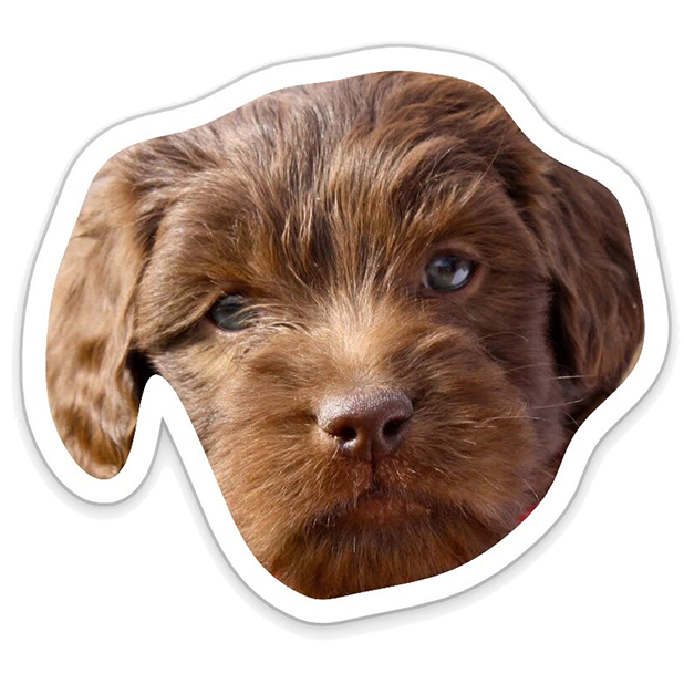 Louie - Dog Stickers for iMessage messages sticker-5