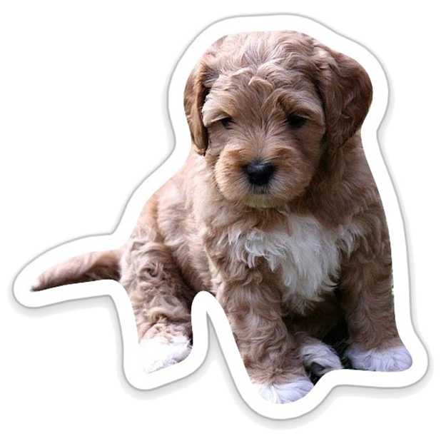 Louie - Dog Stickers for iMessage messages sticker-1