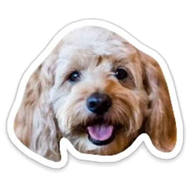 Louie - Dog Stickers for iMessage messages sticker-7