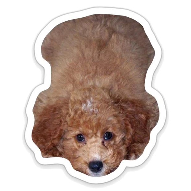 Louie - Dog Stickers for iMessage messages sticker-8