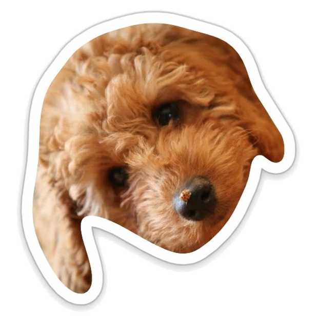 Louie - Dog Stickers for iMessage messages sticker-0
