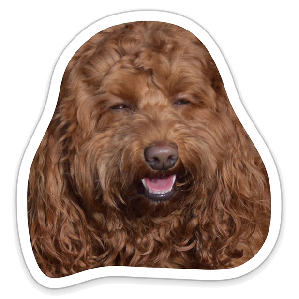 Louie - Dog Stickers for iMessage messages sticker-4