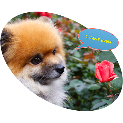 Captain Henry Gingersnaps messages sticker-9