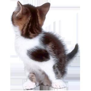 Cat Stickers messages sticker-9
