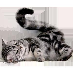 Cat Stickers messages sticker-7