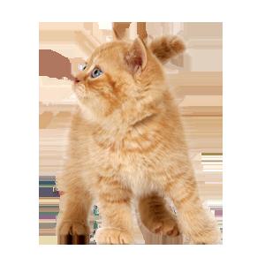 Cat Stickers messages sticker-0