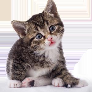 Cat Stickers messages sticker-8