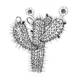 Cactus And Flowers stickers by Weds for iMessage messages sticker-7
