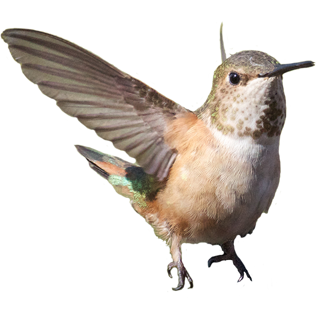 Hummingbird Sticker Pack messages sticker-7