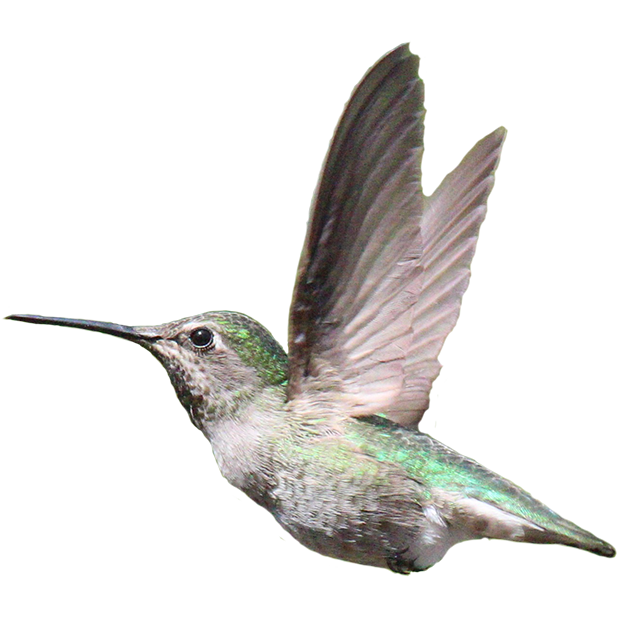 Hummingbird Sticker Pack messages sticker-9