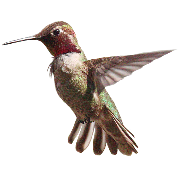 Hummingbird Sticker Pack messages sticker-8