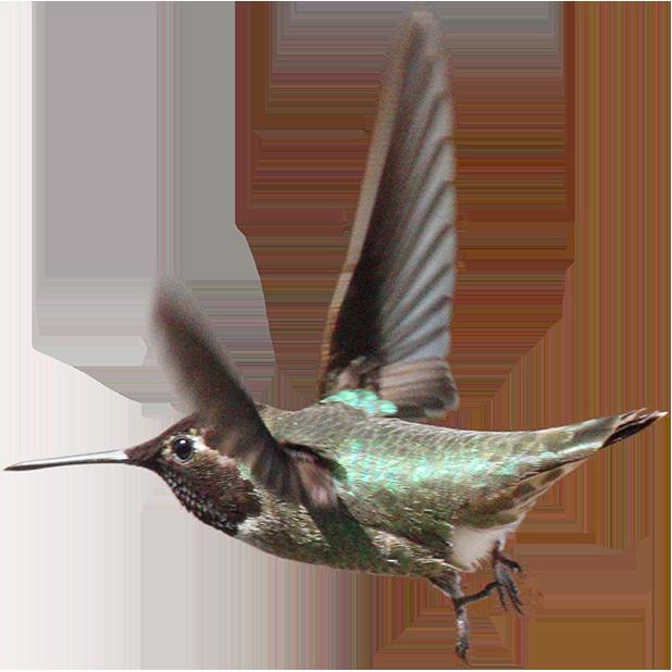 Hummingbird Sticker Pack messages sticker-10
