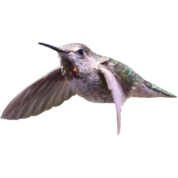 Hummingbird Sticker Pack messages sticker-5