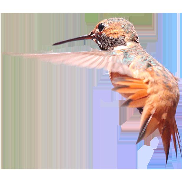 Hummingbird Sticker Pack messages sticker-3