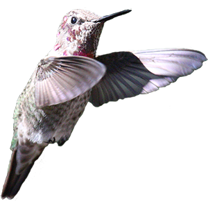 Hummingbird Sticker Pack messages sticker-1