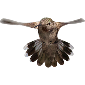 Hummingbird Sticker Pack messages sticker-2