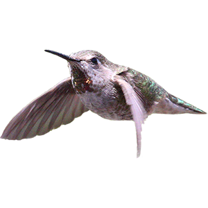 Hummingbird Sticker Pack messages sticker-10