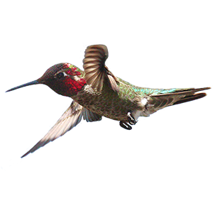 Hummingbird Sticker Pack messages sticker-6