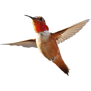 Hummingbird Sticker Pack messages sticker-4