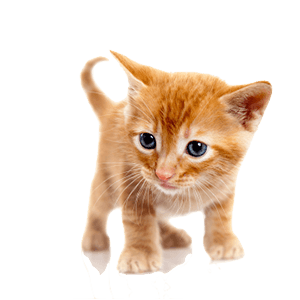 Small Kitty messages sticker-8
