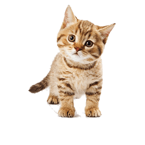 Small Kitty messages sticker-11