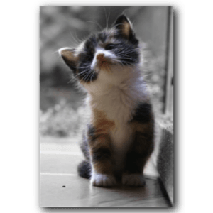 Small Kitty messages sticker-7